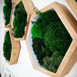 dark green moss decor in white hexagon