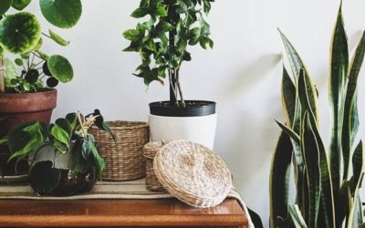 7 Plants for Plant Newbies
