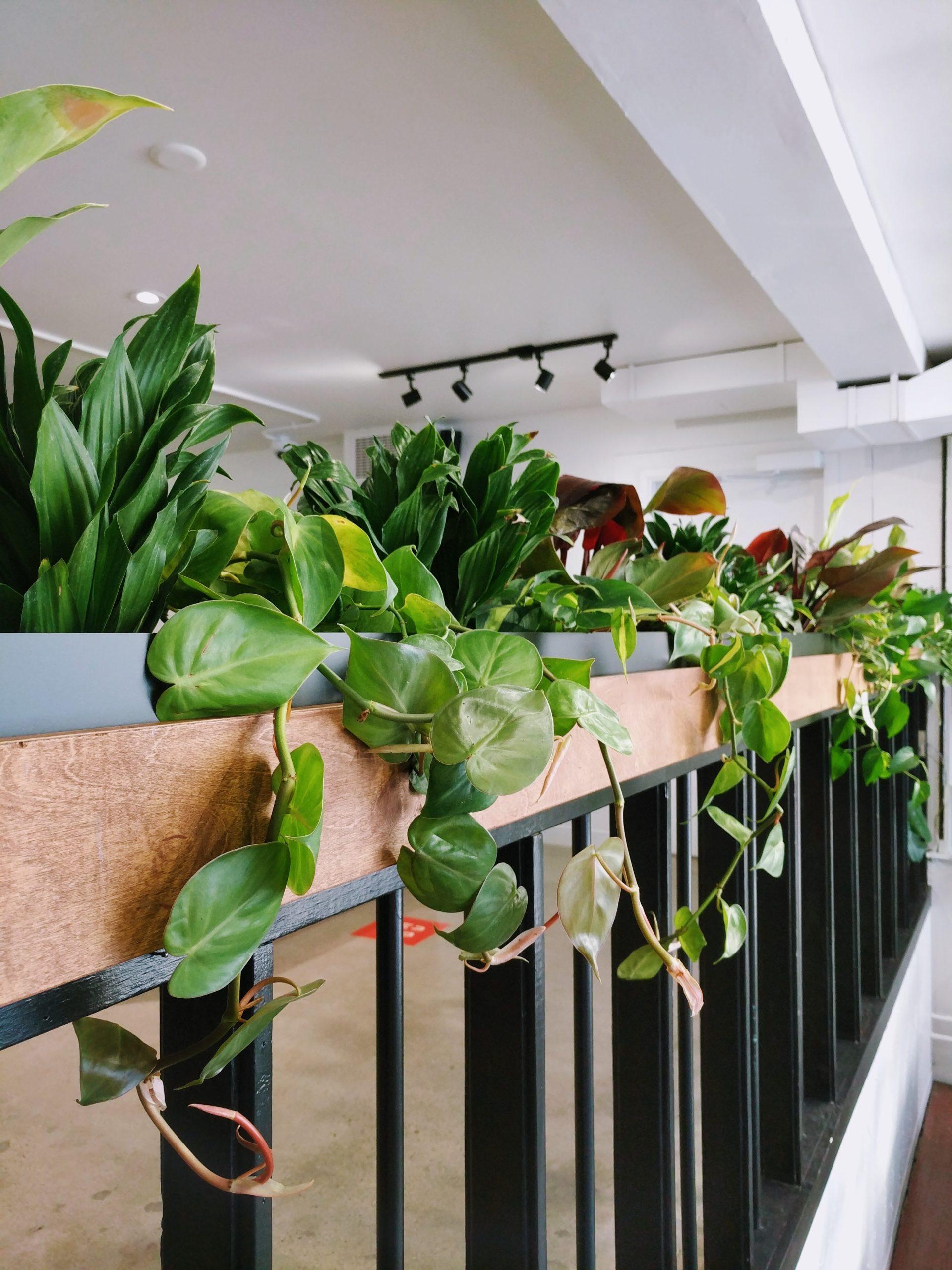 Very nice plant installation in retail store Winnipeg